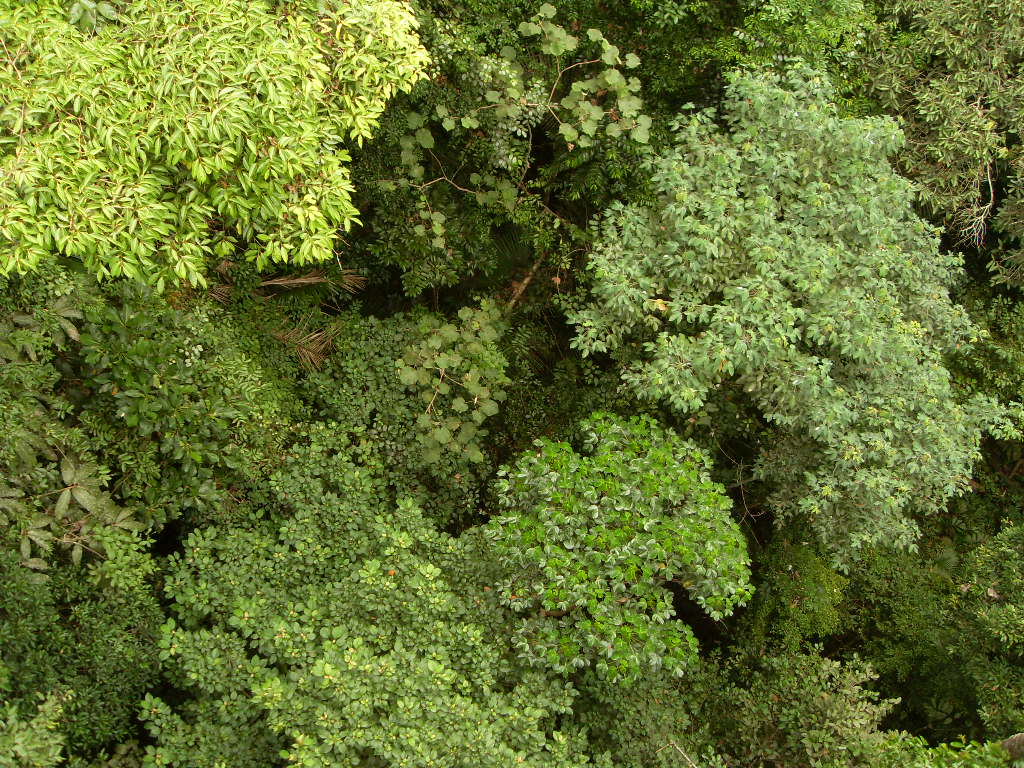 La foret vue d 39 en haut foret vue de haut Table vue de haut